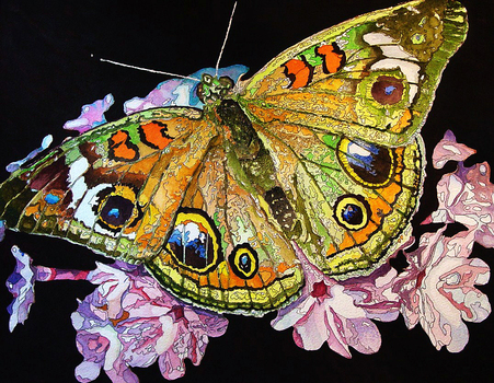 20101205184824-tom_s_butterfly