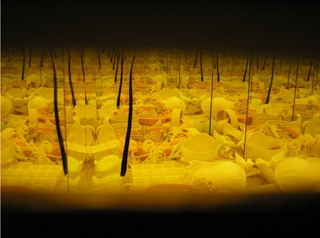 20101207111029-liz_west_yellow_chamber_photograph