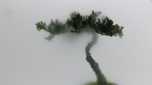20101216141750-001_pine