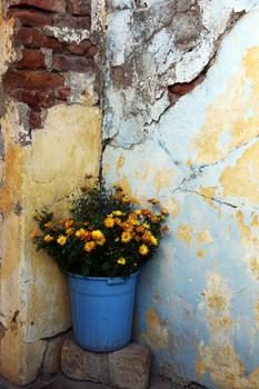 20101221075946-flowers_in_a_corner