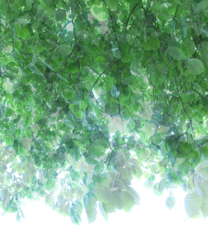 20101225161525-untitled_transparencies___tree_canopy_2_ginafuenteswalker_artslant