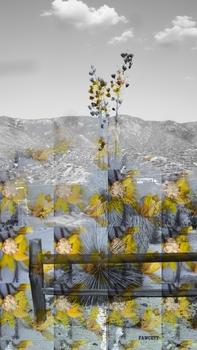 20110110122905-desert50z