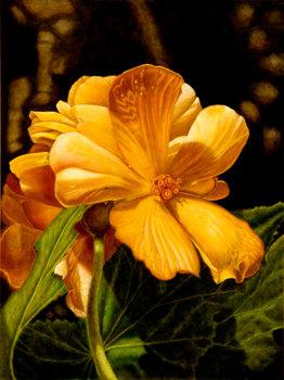 20110112180508-golden-flower