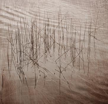 20110112232707-reeds