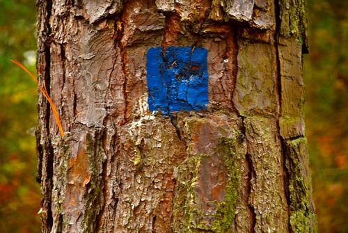 20110117081342-tree20_lowres
