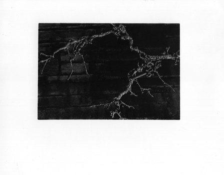 20110117163038-branch