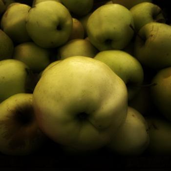 20110122133736-fall_harvest300dpi