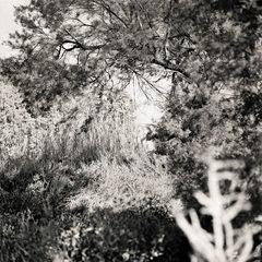 20110224093944-tree_lines__10