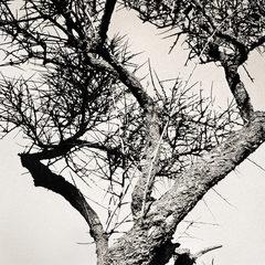 20110224094423-tree_lines__1