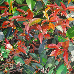 20110125125446-red___green_leaves