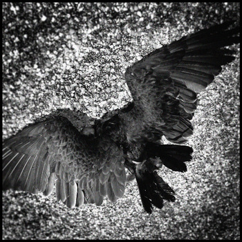 20110125173046-dead_vulture__3__copy