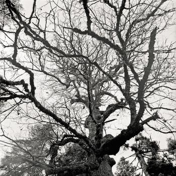 20110224102744-tree_lines__13