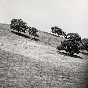 20110224103053-tree_lines__18