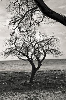 20110224104133-tree_lines__20