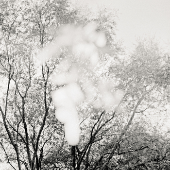 20110224230308-tree_lines__24