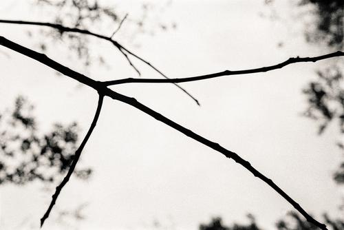 20110224231439-tree_lines__26