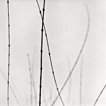 20110224233117-tree_lines__27
