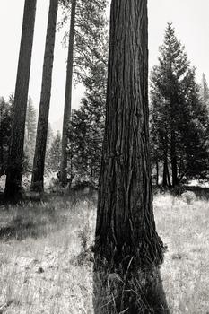 20110224233659-tree_lines__21