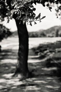 20110224233856-tree_lines__22