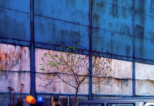 20110128205437-chungking-2001-blue-tree