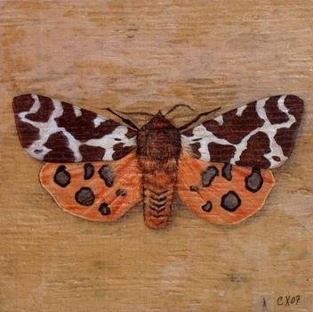 20110202081823-garden_tiger_moth__07__6_22_x6_22_