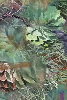 20110203221059-cactus_dance12x18