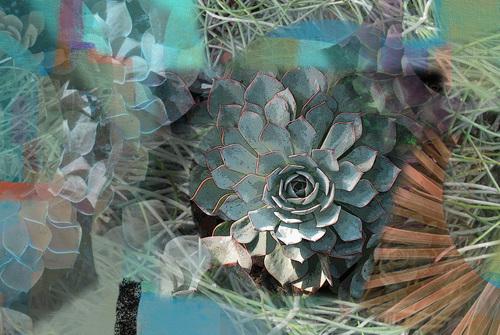 20110203223247-succulent_medley12x18