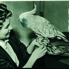 20110205140133-parrot