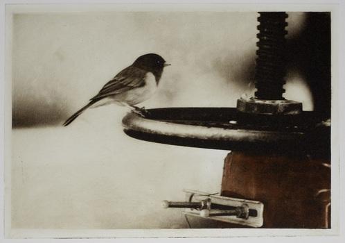 20110210212117-firebird