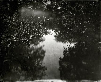 20110213164056-elmaleh_mangroves