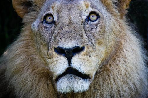 20110214142328-04_aslan