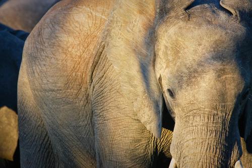 20110214142427-05_swanky_elephant