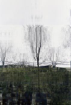 20110216054822-tree