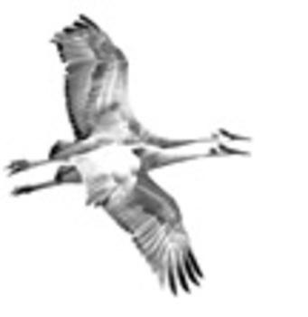 20110218113906-crane_duo-sm