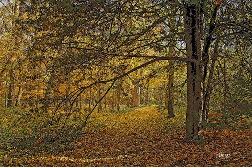 20110219165236-autumn_path