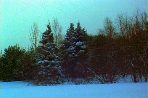 20110221090818-woods