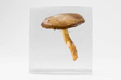 20110222135734-specimen01