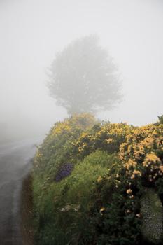 20110223142540-the_foggy_dew