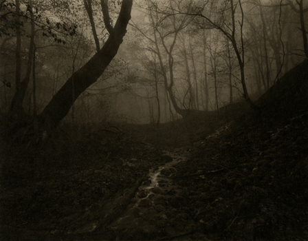 20110303155046-shikama_silentrespirationofforests_5_cc