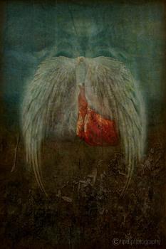 20110309203147-lungs_heartbsm