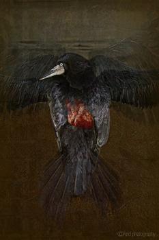 20110309204503-crow_heartbsm
