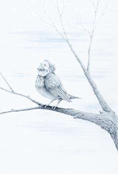 Rb_northern_birdman_rests