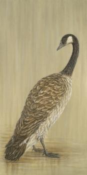 20110319192943-canada_goose