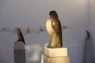 20110323115423-turtle_bird_scotty_2011