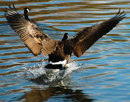 20110329151527-graceful_landing