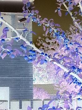 20110331131534-mack_the_garden_of_eden_1_series_2010