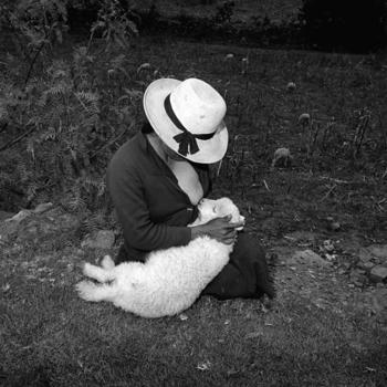 20110405054339-lamb