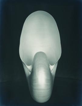 20110408122011-shell