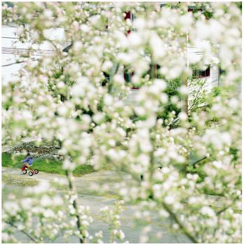 20110416131349-blossums__bg_oh