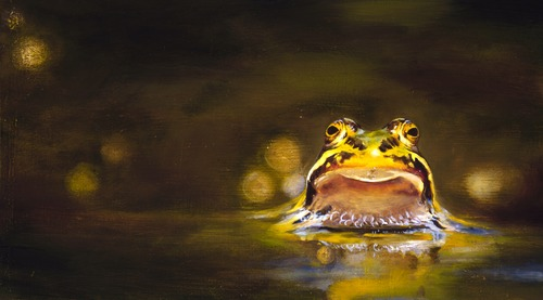 20110420154135-bullfrog